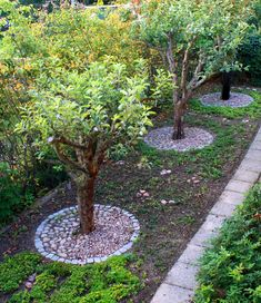 äppelträd plantering sten - Google Search