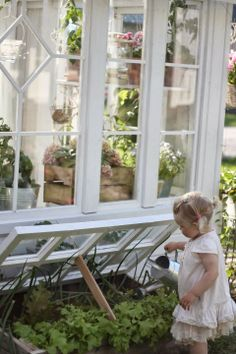 greenhouse and cold frame being watered by this young gardener