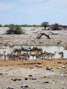 Namibia-Etosha-National-Park-0120