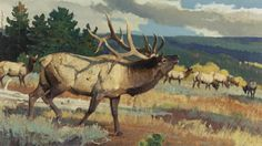Who Is The Greatest Elk Artist That Ever Lived? Deer Paintings, Wildlife Paintings, Wildlife Art, Animal Paintings, Animal Drawings, Landscape Paintings, Nature Hunt, Wild Nature, Rustic Painting