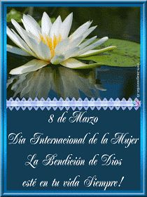 Imágenes Cristianas: Día de la Mujer Funny Cards, Plants, Android, Amor, Christian Women, Christian Pictures, Christians, Happy Birth Day, Guestbook