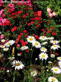Junigarten  The garden in June