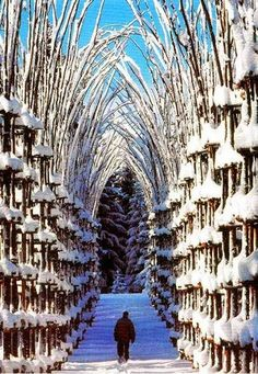 Take a walk and explore the #snow covered tree Cathedral in Bergamo, #Italy  #Bergamo #italy #worldexplore #cathedral #travel