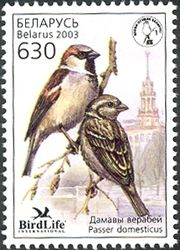 WNS: BY007.03 (Bird of the Year - House Sparrow (Passer domesticus))