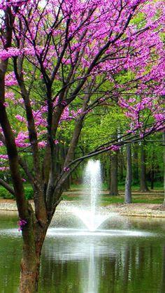 Spring Lake and Tree Nature Wallpaper ~ Fisoloji