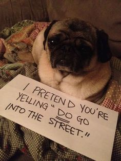 This likely excuse... 23 Photos That Prove Pug Shaming Is The Best Kind Of Dog Shaming