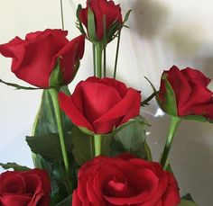 red roses that pop against deep leaves and a cream wall Beautiful Roses, Pretty Flowers, My Flower, Flower Power, Plants Are Friends, No Rain, Red Aesthetic, Aesthetic Roses, Aesthetic Images