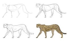 How to Draw Big Cats: Lions, Tigers, Cheetahs, and Much Cheetah Drawing, Lion Drawing, Animal Sketches, Animal Drawings, Tiger Sketch, Cat Anatomy, Mountain Drawing, Super Cat, Cheetahs