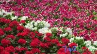 2014 Lalbagh Republic Day Flower show, Bangalore