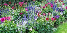 Flowers Perennials, Salvia, Backyard, Garden, Plants, Flowers, Balcony, Patio, Garten