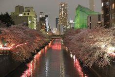 53/365 (2) Sakura in Meguro By Mes Crazy Experiences