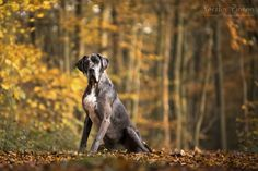 Kerstin Pinnen Photodesign | Tiere Tier Fotos, Dog Pictures, Dogs, Design, Animals, Archive, Animales, Animaux, Pet Dogs