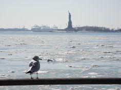 Liberty Statue Of Liberty, New York, Heart, Travel, Animals, Statue Of Liberty Facts, Animais, New York City, Animales