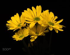 Five Yellow Mums 0417 by Thomas Jerger on 500px