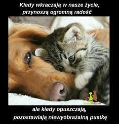 Największy serwis miłośników futrzaków. Polub Nasze Futrzaki na facebooku i czekaj na więcej Cute Cats And Dogs, Animals And Pets, Cats And Kittens, Baby Animals, Funny Animals, Cute Animals, Biblical Verses, Love Text, Good Night Quotes
