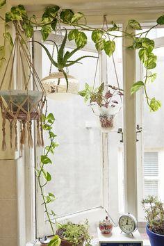 Pendant Lamp Hanging Planters DIY