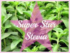 What is Stevia: An Alternative to Sugar