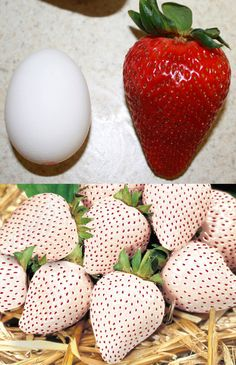 20 Seeds Rare Giant Red Strawberry + 20 White Snow Strawberry Seeds Fruit Fresh Exotic Seeds    INCREDIBLY EASY TO GERMINATE - $4.99