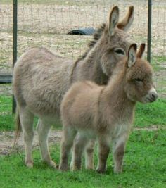 Donkeys and Burrows: Mother Donkey and Her Baby.
