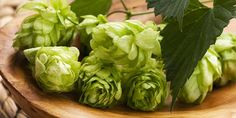Citra hops are one of the most popular ingredients among brewers. Learn how this hop variety became so popular and how to grow your own at home.