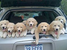 A car full of Happiness!! I would die if this was my car!