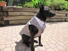 Outfit for Tyler. It sits comfortable for large dogs & he is the ...
