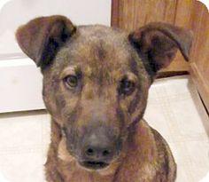 Half off adoption event 6-14 Oak Ridge, TN - German Shepherd Dog Mix. Meet Shania, a dog for adoption. http://www.adoptapet.com/pet/8684785-oak-ridge-tennessee-german-shepherd-dog-mix