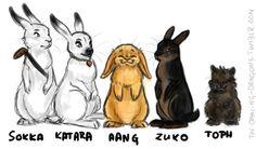 THE LAST EARBENDER Sokka&Katara as arctic hares, Aang as mini lop, Zuko as rex, Toph as lionhead. I regret nothing.