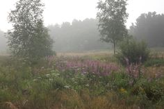 Early summermorning in the forest