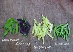 Peas of Many Colors! Growing Vegetables, Green Beans, Harvest, Colors, Garden, Lawn And Garden, Colour, Gardens, Planting Vegetables
