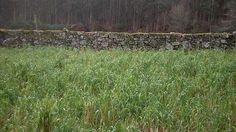 El muro | Familia Libre- Blog de Crianza Respetuosa y Vida Alternativa en Familia http://familialibre.com/blog/8356/el-muro