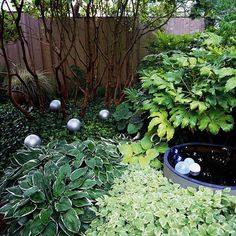 Incorporate Art-Mix in fun, quirky objects to lend personality to your garden. A collection of silver spheres creates a focal point and adds light and charm to this garden. The colorful spheres floating in the water garden provide even more interest. Landscape Elements, Landscape Design, Garden Design, Garden Paths, Garden Landscaping, Shade Landscaping, Shade Loving Shrubs, Colorful Plants, Woodland Garden