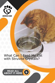 The best food is not dry food - but also the wet and lots of water - Get more information at AnimalsA2Z.com. Free Cat Food, Cat Food Brands, Best Cat Food, Canned Cat Food, What Cat, Cat Care Tips, Outdoor Cats, Cat Life, Cool Cats
