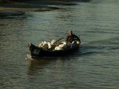 Galerie foto DD - REZERVATIA BIOSFEREI DELTA DUNARII Danube Delta, Boat, Dinghy, Boats