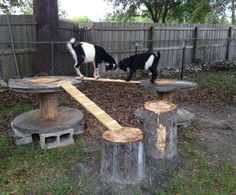 Goat playground made from logs, wire spools and scrap wood.