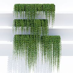 Sunset ivy 3D model | CGTrader
