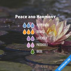 Peace and Harmony - Essential Oil Diffuser Blend