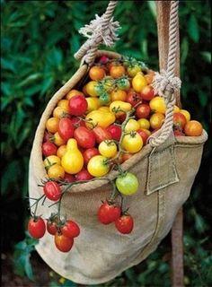froglevelfarm:  tomatoes, upcycled bag, on pinterest