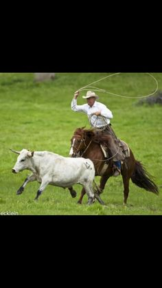 Real working cowboy