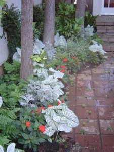 Flower Bed Bordering Walkway Landscaping With Rocks, Outdoor Landscaping, Outdoor Gardens, Landscaping Ideas, Flower Bed Borders, Flower Beds, Beautiful Flowers Garden, Beautiful Gardens, Unique Gardens