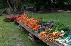 Produce at Junior Hill's Farmers Market - Bermuda