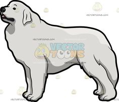A Beautiful Great Pyrenees Dog :  A dog with white coat droopy ears thick tail looking curious and intrigued  The post A Beautiful Great Pyrenees Dog appeared first on VectorToons.com.   #clipart #vector #cartoon