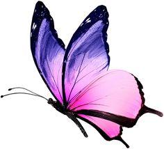 pierrezarpin - 0 results for butterfly Purple Butterfly Tattoo, Butterfly Clip Art, Butterfly Drawing, Butterfly Pictures, Butterfly Painting, Butterfly Wallpaper, Butterfly Watercolor, Butterfly Wings, Art Papillon
