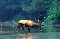 Dunajské luhy: Překrásná čistá příroda | Články | PEČENĚ-VAŘENĚ