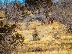 Wild horses in Nevada on the high desert. #michelejamesphotography #wildhorses #Nevada #stockphotography