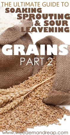 The Ultimate Guide to Soaking, Sprouting, & Sour Leavening Grains - Part 2 - Weed'em & Reap