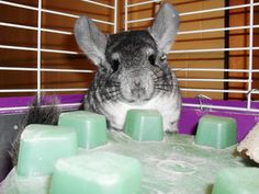 gizmo- Who's the Cutest Pet? Add your pet and vote today - www.Cute-A-Rater.com