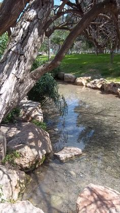 Israel | Gideon's Spring clear water bubbling  brooks creeks light colored large stones
