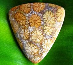 This Fossil Coral Cabochon from Indonesia shows a rare coloration, looking like a field of dandelions