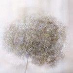 Hydrangea by ..Ania.